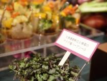 koike-ws-vegetable-14.jpg