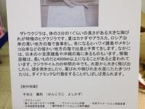 senkoji-ws-kujira_20120807-2.jpg